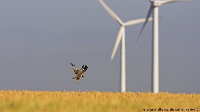 Вормс (Рейнланд-Пфальц) Альтернативна енергетика Німеччини