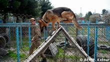 Der beste Freund des Menschen: Die Hunde, die in Kabul Sprengstoff schnüffeln.
