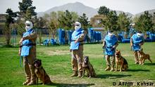 7.4.2019, Kabul, Afghanistan, In this photo taken on April 7, 2019, Afghan dog handlers stand as explosive detection dogs sit next to them during a practice session at the Mine Detection Centre (MDC) in Kabul. - Naya, a three-year-old Belgian malinois, focuses intently as she leaps over hurdles and zooms through tunnels on an obstacle course at a training centre on a hill overlooking Kabul. (Photo by WAKIL KOHSAR / AFP) / To go with story 'AFGHANISTAN-CONFLICT-MINES, FOCUS' by Thomas Watkins
