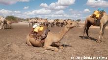 Drought in WajirCounty, Kenya 2019. Photo: Shisia Wasilwa / DW