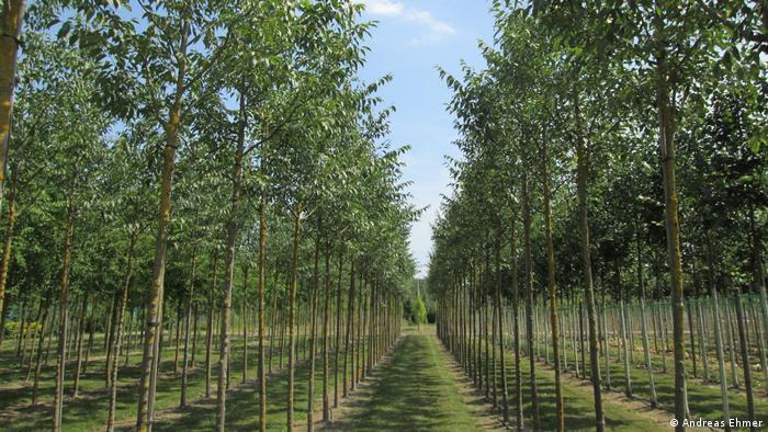 Tree nursery in Germany, Karlsruhe