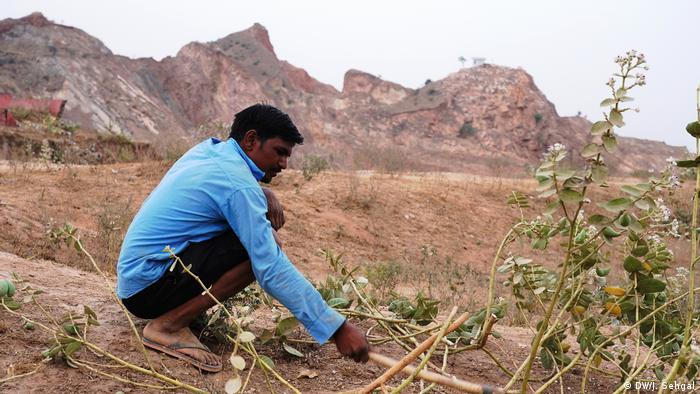 A man cutting down a bush in front of the Aravali mountains