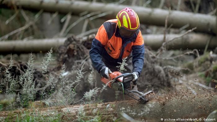 Forestry worker cutting a tree with a chainsaw
