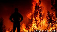 Portugal Waldbrände