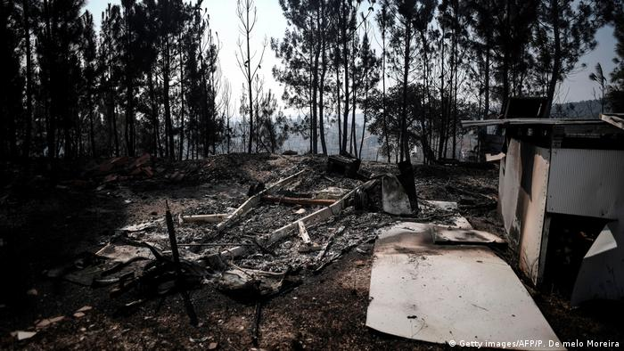 Bosque incendiado en Portugal.