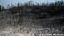 Trees are seen after a forest fire near the village of Cardigos, Portugal July 22, 2019.