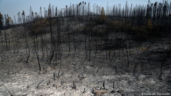 Burned trees after a forest fire near the village of Cardigos, Portugal July 22, 2019