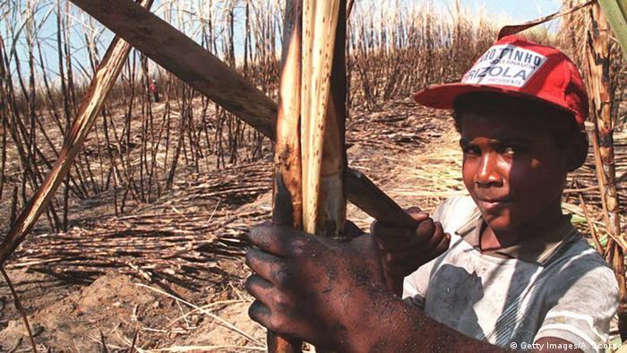 Zuckerrohr Ernte Brasilien