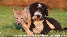 BdT | Hund mit Wölfin