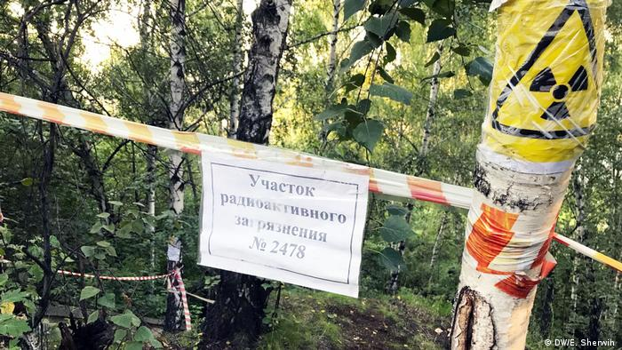 Tape and markings attached to a birch tree showing an area to be radioactive