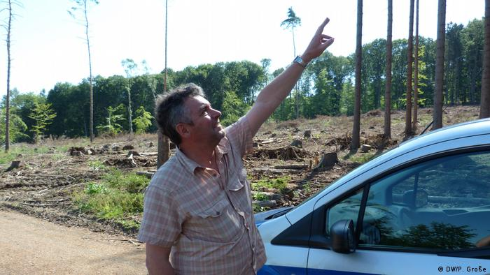 Stephan Braun points to trees in a forest near Sinzig (DW/P. Große)