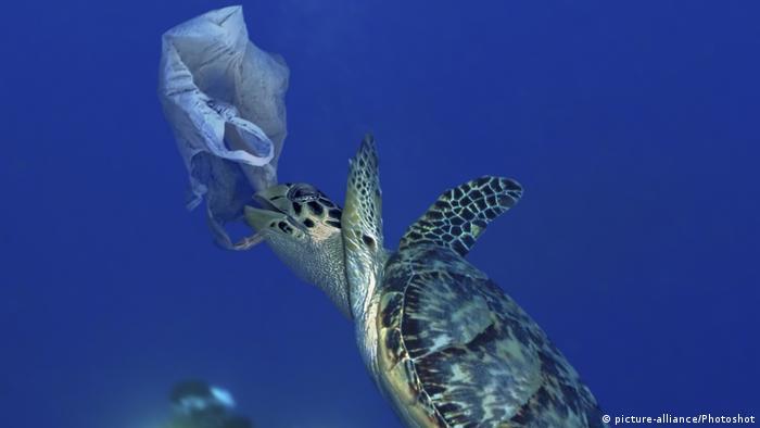 Plastik poşetler deniz canlılarında ölüm ve yaralanmalara yol açıyor.