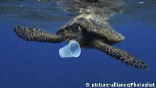 Wasserschildkröte mit Plastikmüll