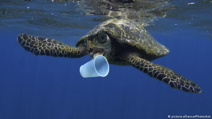 Sea turtle biting a plastic cup