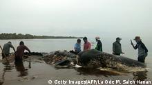 Indonesien Wal mit Plastik im Bauch