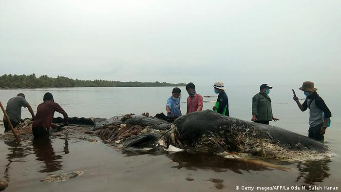 A dead whale with plastic in its stomach in Indonesia