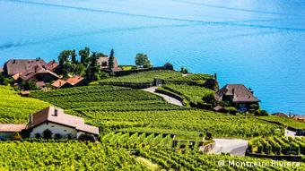 Die Weinterrassen von Lavaux