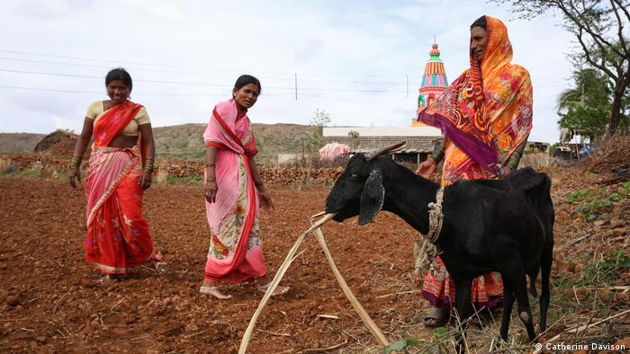 Three women in bright saris stand in a field. A black goat stands in the foreground