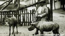 Berliner Zoo - Tierwärter Ohlsen mit einem Nashornbaby um 1925