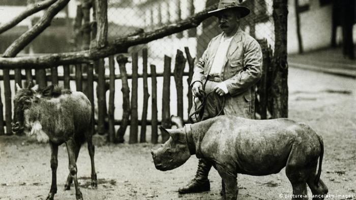 A zoo keeper with a baby rhino and a goat