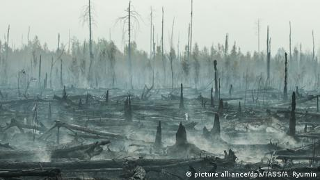 Massive forest fires in Russia (picture alliance/dpa/TASS/A. Ryumin)