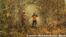 The forest fire brigade of the Environmental and Forestry Ministry (Manggala Agni) try to extinguish a burning peatland fires in Kampar District, Riau Province, Indonesia on July 26, 2019Hot Weather Causes Forest Fire in Riau to Continue to Expand. (Photo by Afrianto Silalahi/NurPhoto)   Keine Weitergabe an Wiederverkäufer.