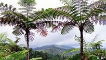 Caribbean National Forest, Puerto Rico, photo