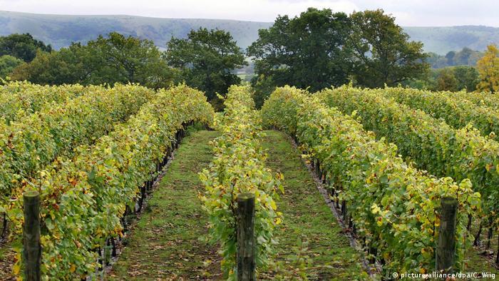 RidgeView Wine Estate (picture-alliance/dpa/C. Wiig)