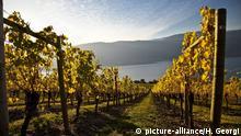 BG: Wein aus dem Norden