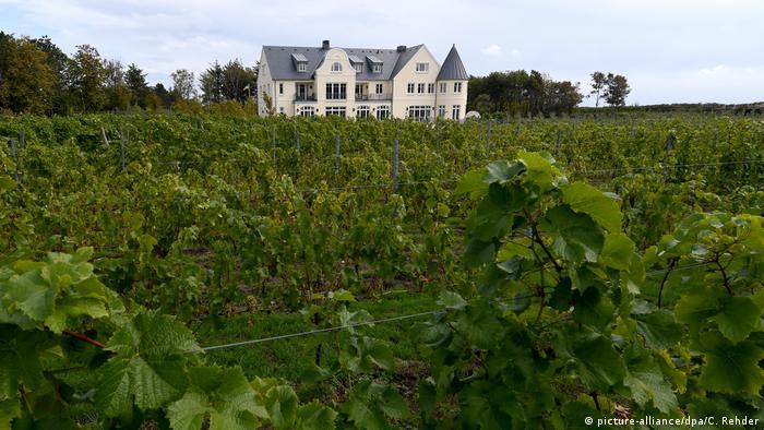Vineyards at Weingut Waalem (picture-alliance/dpa/C. Rehder)