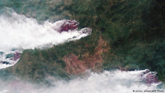 Вид сверху на лесные пожары