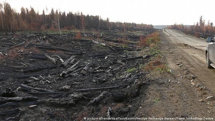 Сгоревший лес под Красноярском