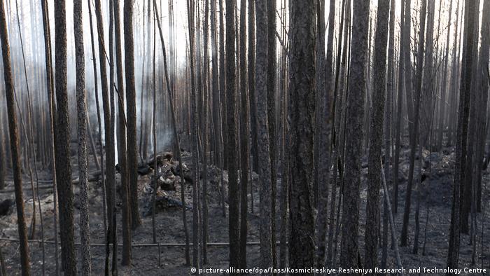 Сгоревший лес в Сибири