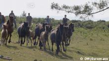 DW Euromaxx, Wildpferde-Treiben