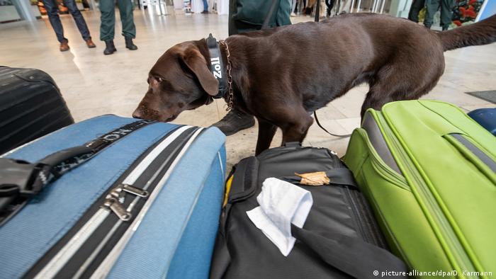 Pies niemieckiej służby celnej kontroluje bagaże na lotnisku