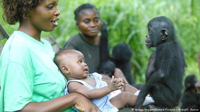 A surrogate human mother of an orphaned bonobo and her own baby (Imago Images/Nature Picture Library)
