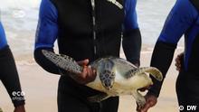 Eco Africa Schildkrötenrettung an der Elfenbeiküste