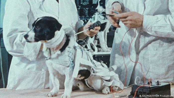 Pressebilder Filmfestival Locarno | Space Dogs: Szene mit Hund Laika in Weltraumkluft