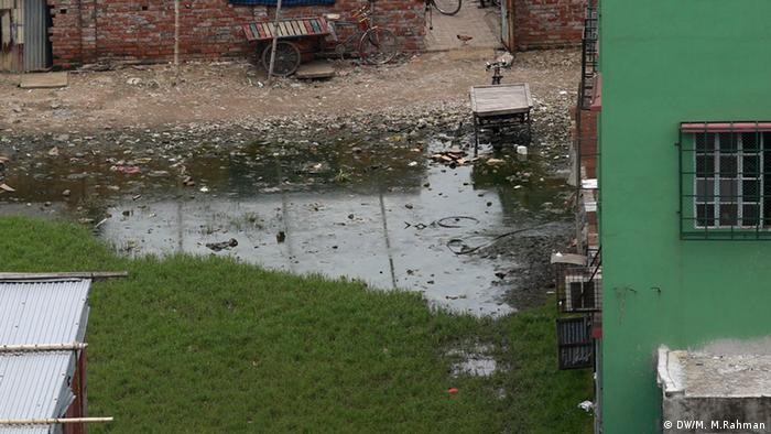 Moskito Brutgebiete in Dhaka, Bangladesch (DW/M. M.Rahman)