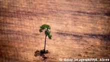 Brasilien Einzelner Baum nach Abholzung im Amazonas Regenwald