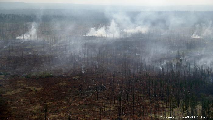 Russland Waldbrände in der Region Krasnojarsk (picture-alliance/TASS/D. Sorokin)