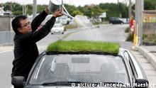 Grünes Auto - Japaner erspart sich Klimaanlage durch Grasdach