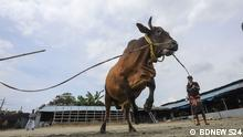 Bangladesch Viehwirtschaft Samarai
