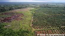Indonesien | Abholzung für Palmöl