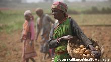 Indien Landwirtschaft Kartoffeln