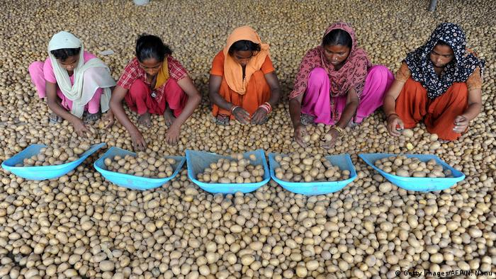 Indian labourers sorting potatoes (Getty Images/AFP/N. Nanu)