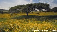 Äthiopien - Weltrekord im Bäume pflanzen -Symbolbild