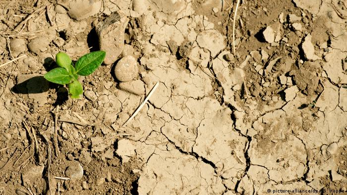 Dry soil in Germany