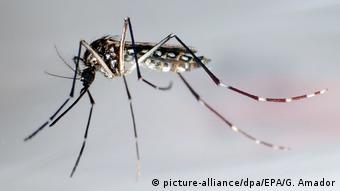 Symbolbild Denguefieber (picture-alliance/dpa/EPA/G. Amador)