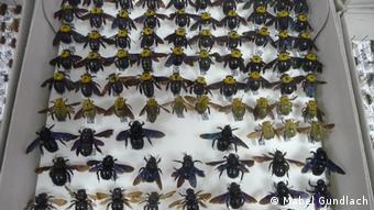 Οι ίδιοι οι αγρότες να αναλάβουν πρωταγωνιστικό ρόλο για την προστασία των μελισσών τονίζει η Μαρία Σπυράκη